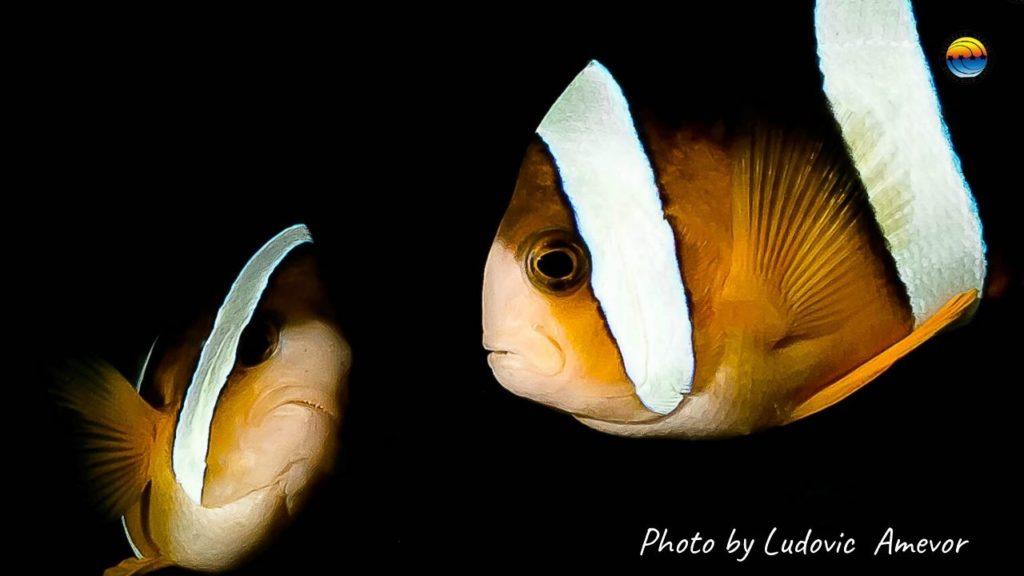 pez-anemona