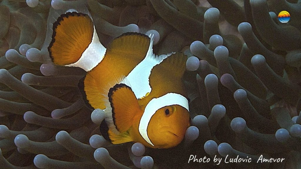 vida-marina-bali