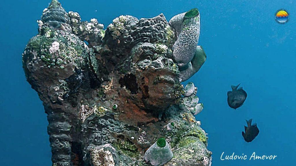 Submarinismo-Amed