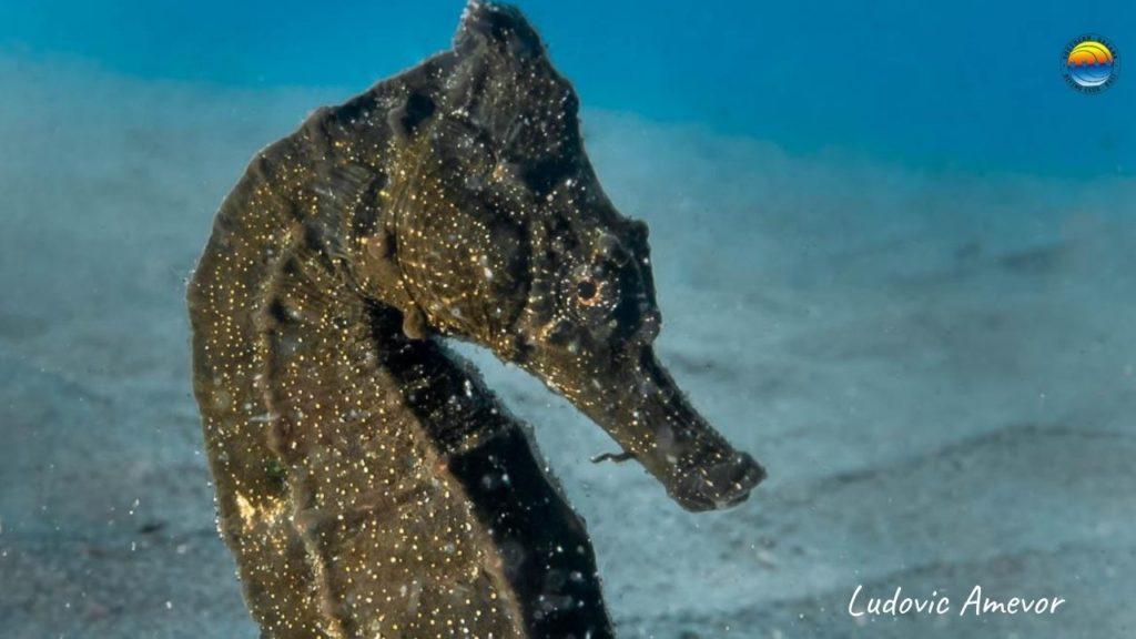 bali-caballito-de-mar