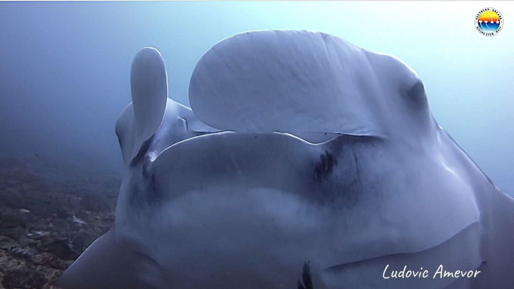 bali-submarinismo-manta-raya