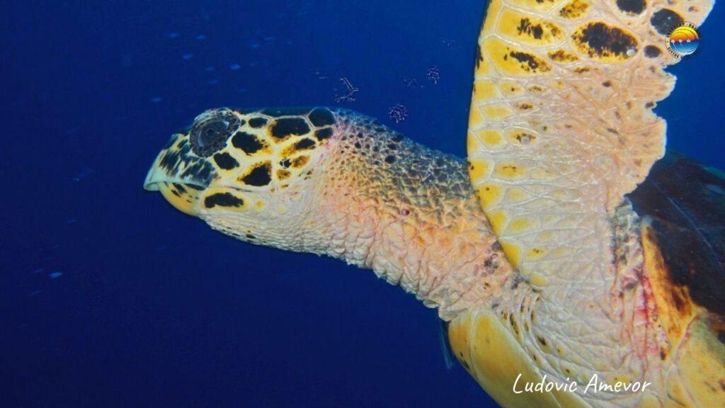 bali-tortugas