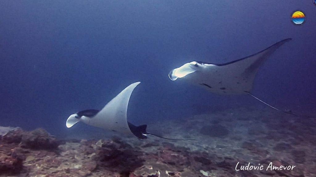 submarinismo-nusa-penida