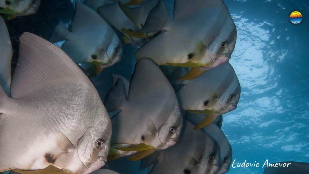 submarinismo-bali