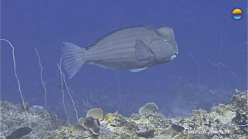 buceo-bali-indonesia