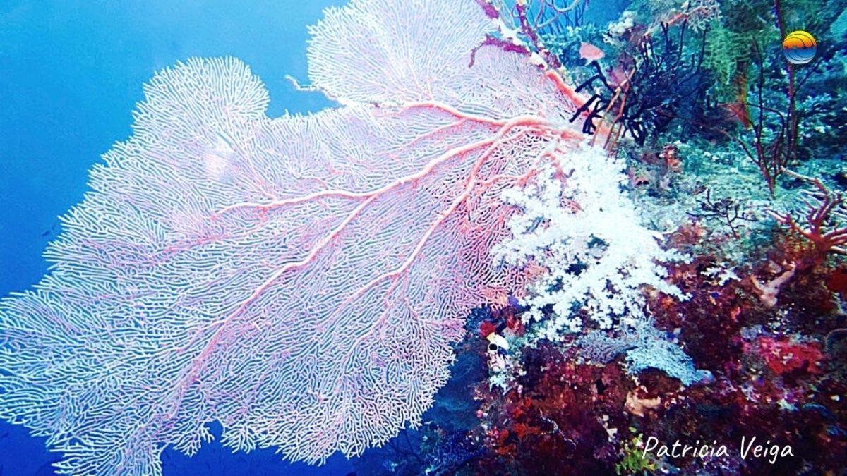 buceo-responsable-y-sostenible-100-comprometidos-con-nuestros-oceanos