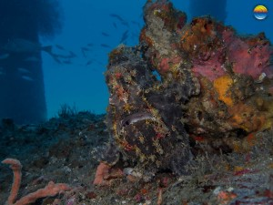 southern-dreams-diving-club-candidasa-bali-10