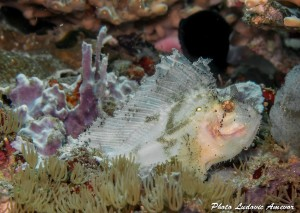 southern-dreams-diving-club-candidasa-bali-29