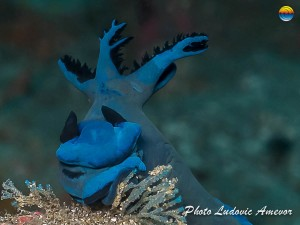southern-dreams-diving-club-candidasa-bali-38